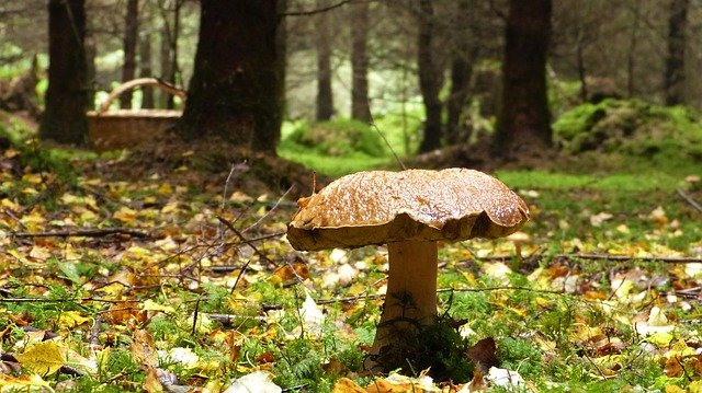houba v lese