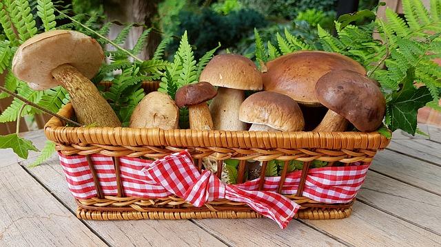 houby a kapradí